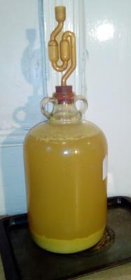 Demijohn with fermenting orange wine